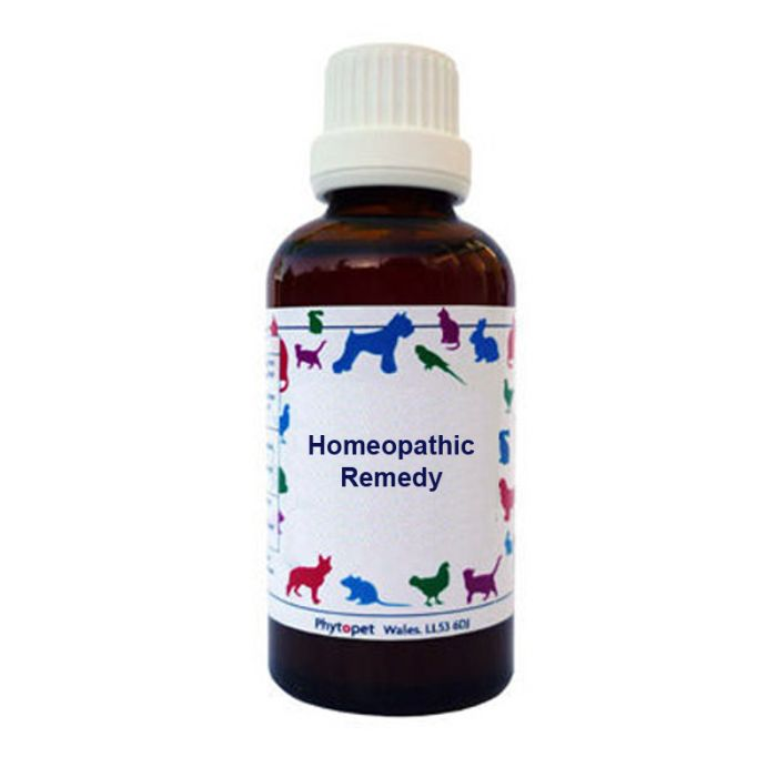 Nosodes for Dogs Kennel Cough